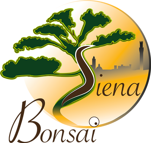 Siena Bonsai